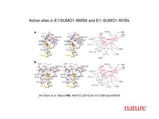 SK Olsen  et al. Nature 463 , 906-912 (2010) doi:10.1038/nature08765