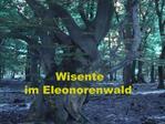 Wisente                   im Eleonorenwald