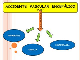 ACCIDENTE  VASCULAR  ENCEFÁLICO (A.V.E.)