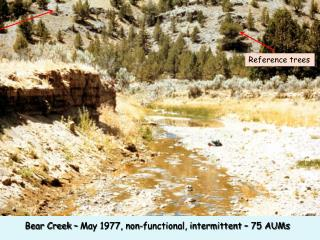 Bear Creek – May 1977, non-functional, intermittent – 75 AUMs