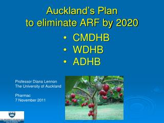 Auckland's Plan to eliminate ARF by 2020