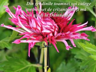 Din grădinile toamnei voi culege un buchet de crizanteme şi mă voi gîndi la Dumneata.