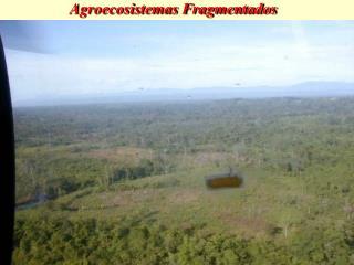 Agroecosistemas Fragmentados