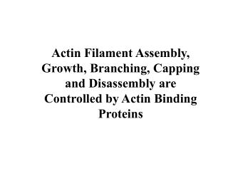 Actin Filament Assembly, Growth, Branching, Capping and Disassembly are