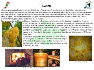 L'ARAK