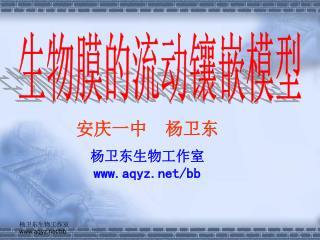 安庆一中 杨卫东 杨卫东生物工作室 aqyz/bb