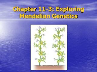 Chapter 11-3: Exploring Mendelian Genetics