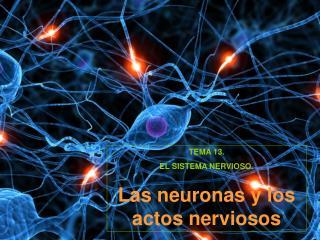 TEMA 13.  EL SISTEMA NERVIOSO. Las neuronas y los actos nerviosos