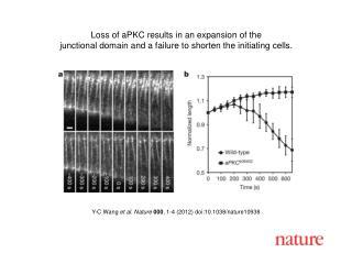 Y-C Wang  et al .  Nature 000 ,  1 - 4  (2012) doi:10.1038/nature10938
