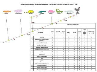 arbre phylogénétique vertébrés -exemple n°1- d'après B. Chanet –bulletin APBG n°3 1997