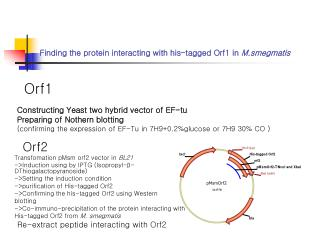 Finding the protein interacting with his-tagged Orf1 in  M.smegmatis