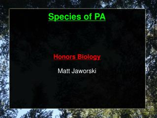 Species of PA