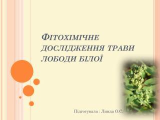 Фітохімічне  дослідження трави лободи білої