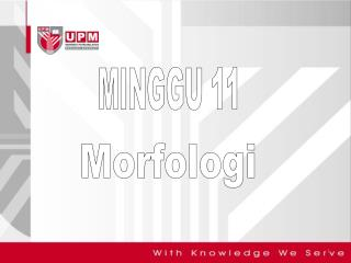 MINGGU 11