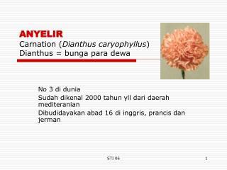 ANYELIR  Carnation ( Dianthus caryophyllus ) Dianthus = bunga para dewa