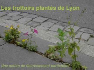 Les trottoirs plantés de Lyon