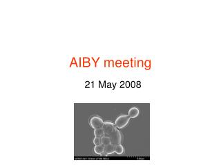 AIBY meeting