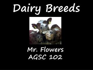 Dairy Breeds