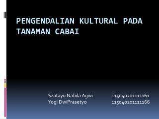 PENGENDALIAN  K ULTURAL PADA TANAMAN CABAI