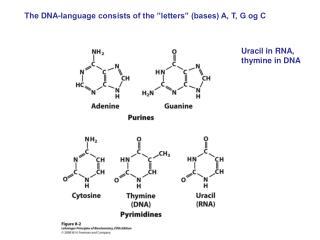 Uracil in RNA, thymine in DNA