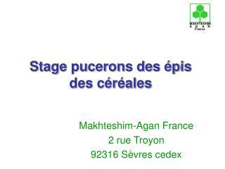 Stage pucerons des épis des céréales