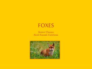 FOXES Senior Classes Scoil Naomh Caitríona