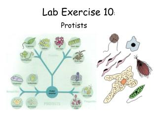 Lab Exercise 10 :
