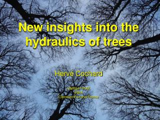 New insights into the hydraulics of trees