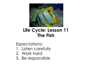 Life Cycle: Lesson 11 The Fish