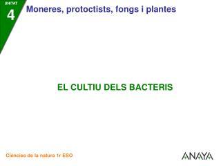 •  Els bacteris es poden cultivar en el laboratori gràcies als denominats   cultius de bacteris.
