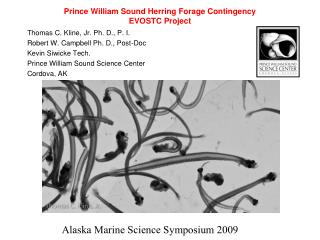 Prince William Sound Herring Forage Contingency EVOSTC Project