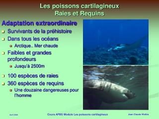 Les poissons cartilagineux Raies et Requins