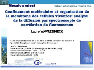 Confinement mol culaire et organisation de la membrane des cellules vivantes: analyse de la diffusion par spectroscopie