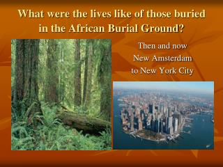What were the lives like of those buried in the African Burial Ground?