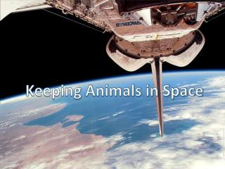 Keeping Animals in Space
