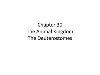 Chapter 30 The Animal Kingdom The Deuterostomes