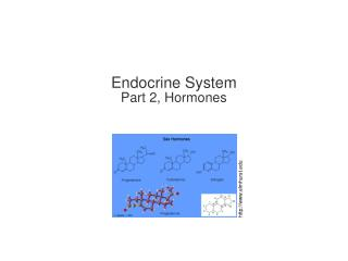 Endocrine System Part 2, Hormones