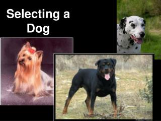 Selecting a Dog