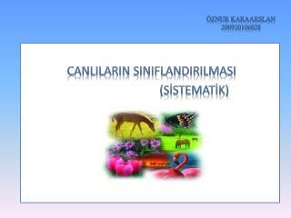 ÖZNUR KARAARSLAN 200920106028