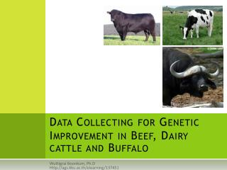 Data Collecting for Genetic Improvement in Beef, Dairy cattle and Buffalo