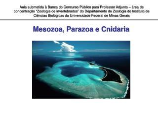Mesozoa, Parazoa e Cnidaria