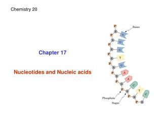 Chapter 17 Nucleotides and Nucleic acids