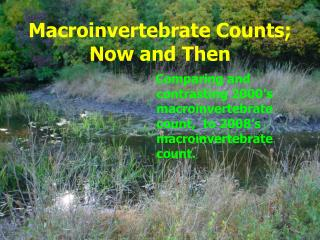 Macroinvertebrate Counts; Now and Then