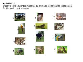 Actividad . 2 Observa en la siguientes imágenes de animales y clasifica las especies en