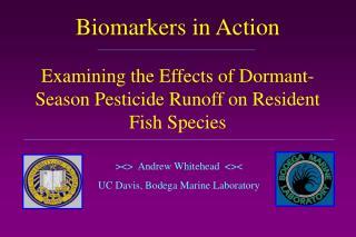 ><>  Andrew Whitehead  <>< UC Davis, Bodega Marine Laboratory