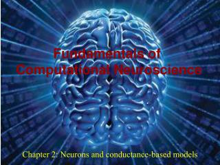 Chapter 2: Neurons and conductance-based models