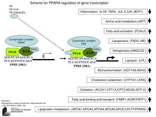 FA FA-CoA FA metabolite
