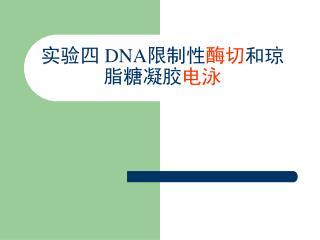 实验四  DNA 限制性 酶切 和琼脂糖凝胶 电泳