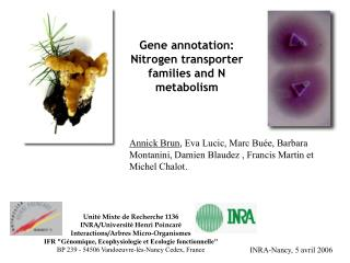 Gene annotation: Nitrogen transporter families and N metabolism