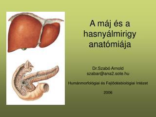 A máj és a hasnyálmirigy anatómiája